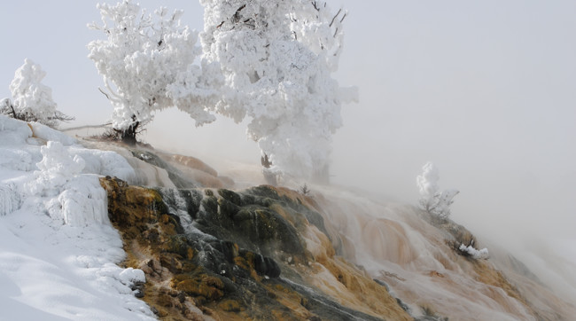 Mammoth Hot Springs in the winter
